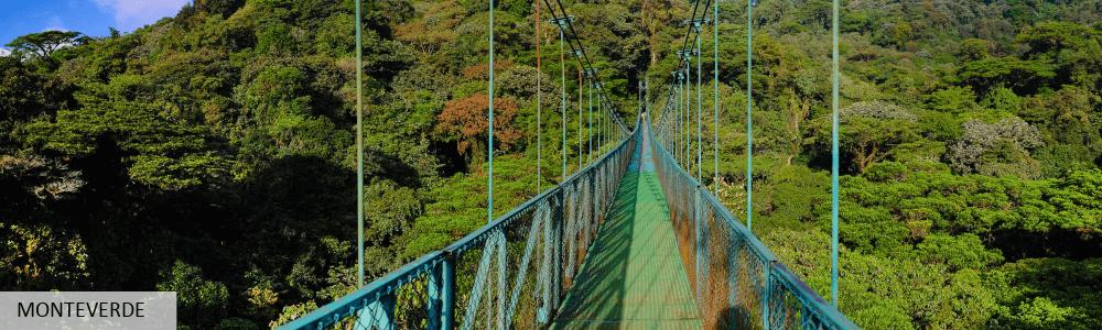 photo-illustration-monteverde